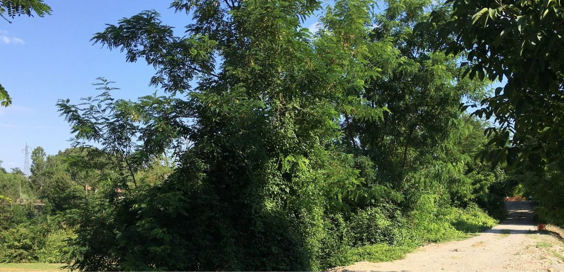 La Greenway risale verso Varzi