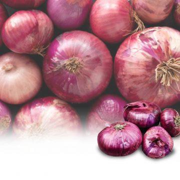 """La """"rossa"""", la cipolla di Breme è Presidio Slow Food"""